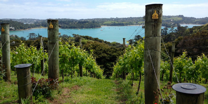 waiheke island wine tours seo review